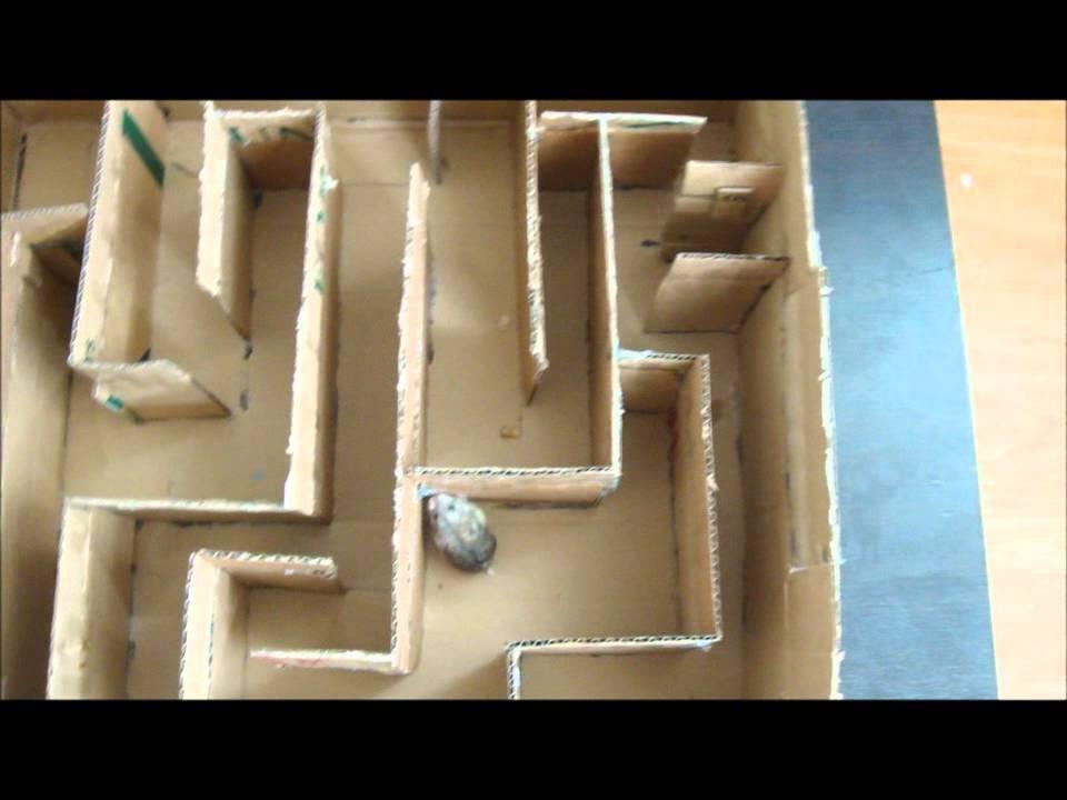 Siberian Dwarf Hamster Maze Youtube