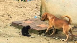 Briga de cão e gato - Cachorro implicante!