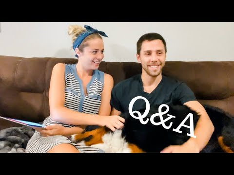 Bernese Mountain Dog Q&A