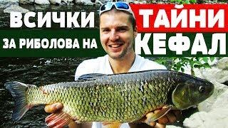 Всички ТАЙНИ за Риболова на КЕФАЛ!!! Риболов за начинаещи! CHUB / ГОЛАВЛЬ