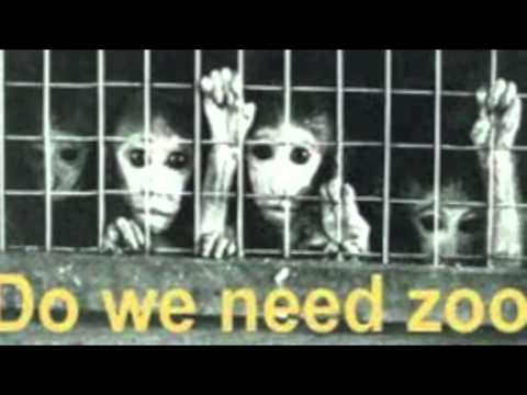 why animals should be free