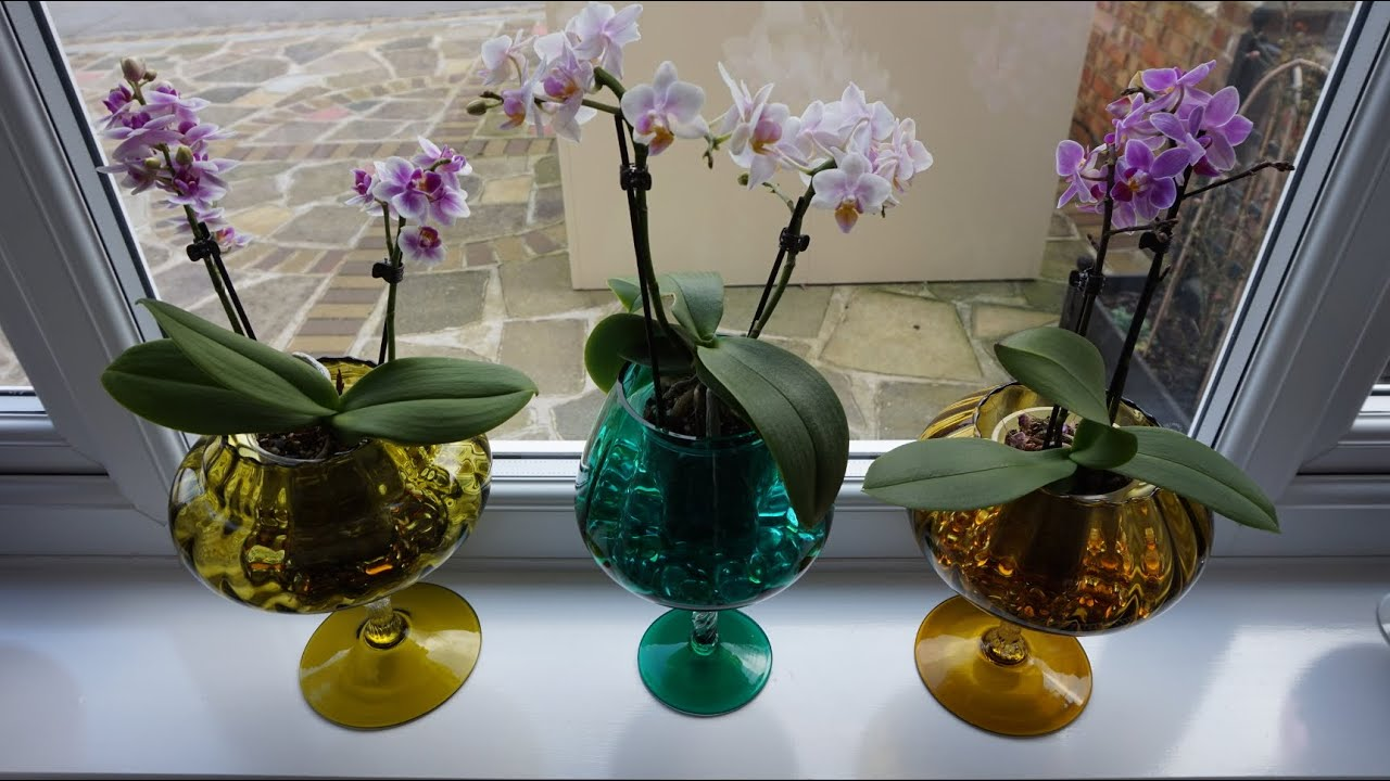 How to repotting Phalaenopsis Orchid Flower DIY Project ...