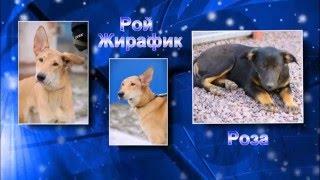 Ильинка приют для животных Санкт - Петербург