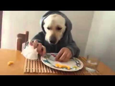 Un chien qui mange comme un humain - YouTube