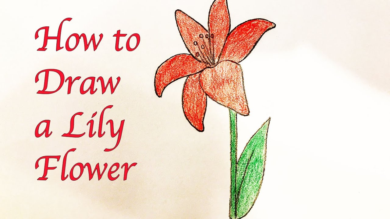drawing for kids how to draw a lily