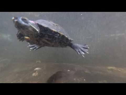 Test Underwater Camera di Kolam WOWURAA
