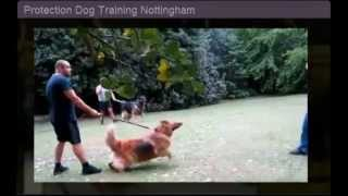Protection Dog Training Nottingham