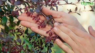 5 łatwych w uprawie krzewów