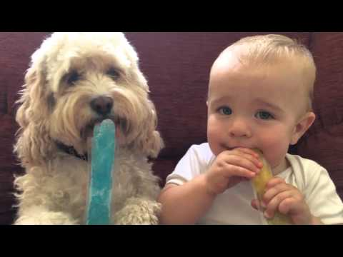 Image result for dog eating an ice block
