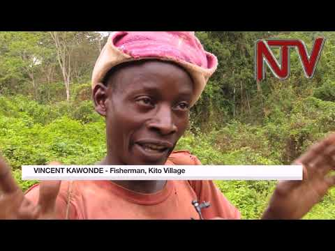NTV PANORAMA:  SCOUL Sugar factory destroying River Musamya in Buikwe