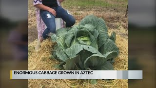 New Mexico girl selected as winner of Bonnie Plants' cabbage contest