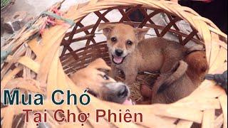 Phiên Chợ Chó Mèo Cảnh Lớn Nhất Hà Nội/ Chợ 365 Hà Đông/ NhamṪuatTV - Dog in Vietnam