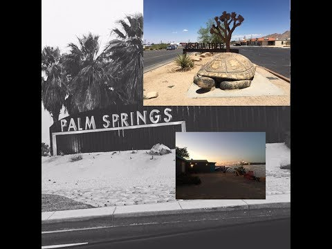 | Griffith | Cat Cafe | Joshua Tree Adventures | Antiques | Palm Springs