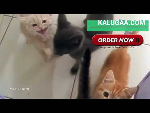 Funny Cats and Kittens Meowing Compilation Ever 2019 New