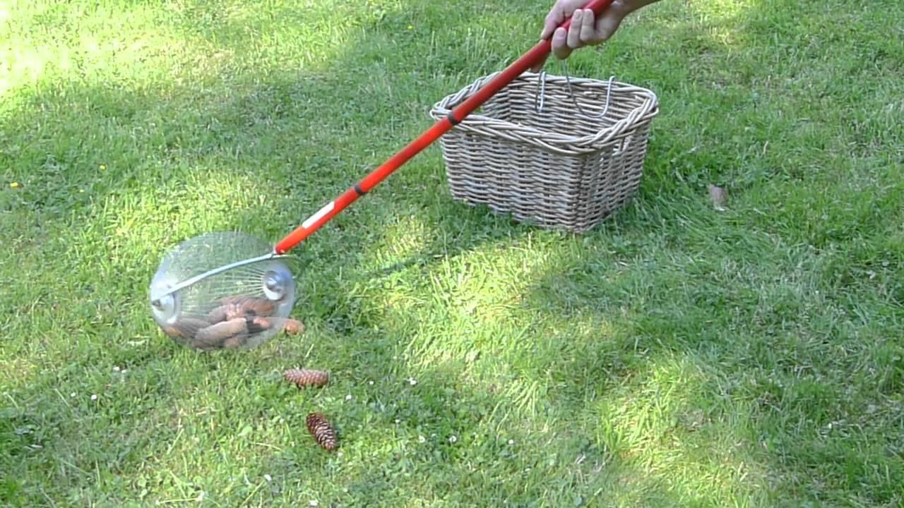 Ramasser les pommes de pin et autres fruits sans efforts - Activite avec des pommes de pin ...