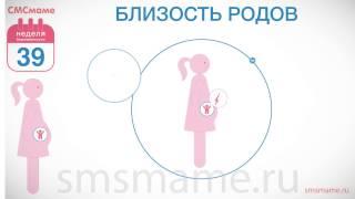 видео 39 неделя беременности, что происходит с малышом и мамой