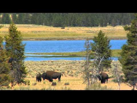 Yellowstone: Fishing Bridge to Canyon Village