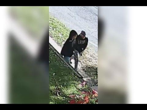 Robbery 110xx block of Philmont Terrace DC 15 07 029554