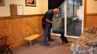 "10 Week Old German Shepherd Puppy ""vlad"" Obedience Trained Protection"