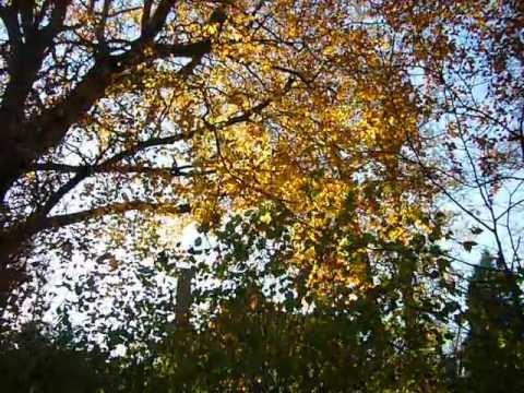Wind Door Nias Bomen Filmpje Van Literair Vertaler Guido Goluke Youtube
