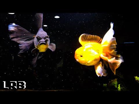 4K Aquarium Co-op Fish Room Tour Turtles and Tropical Fish