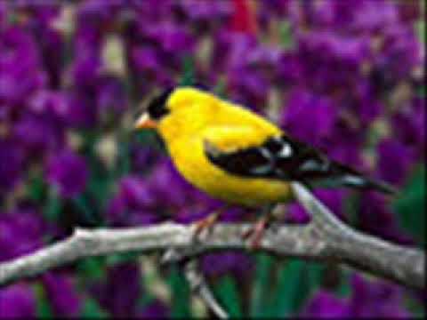 Yellow Bird    Ventures
