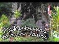 Paku bumi tanah Jawa