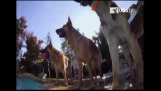 Dog TV: El primer canal para perros