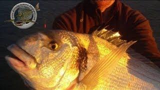 pescadoradatanero DOS DORADAS fishing orata peche dorade pesca dorada.wmv