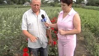 Саджанці Троянд,Тернопіль,с.Мар