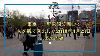 東京上野恩賜公園にて桜を観てきました2018年3月23日不忍池編 thumbnail