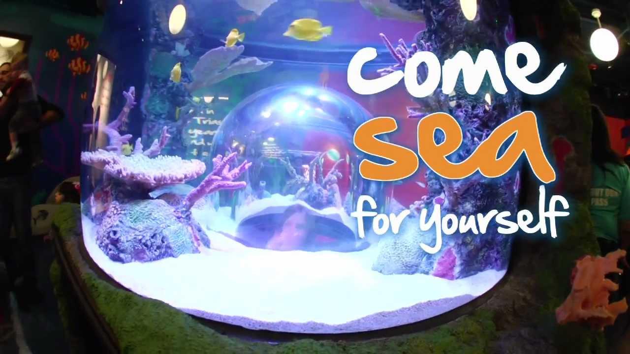 the making of sea life kansas city aquarium 2012 youtube. Black Bedroom Furniture Sets. Home Design Ideas