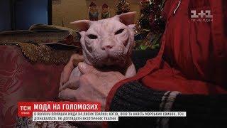 Закохатися з першого дотику: до України прийшла мода на лисих тварин