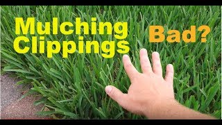 Does Mulching Clippings Cause Thatch Buildup In Lawns?