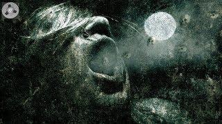 Horror Hörspiel - Der Fluch