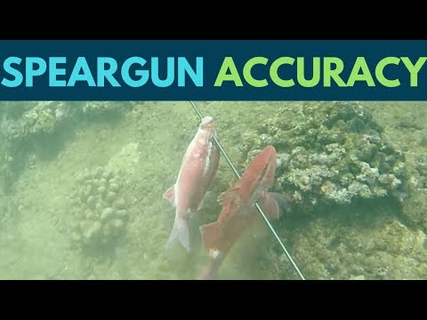 Spearfishing Accuracy With A Speargun(Hawaii Spearfishing Tips)