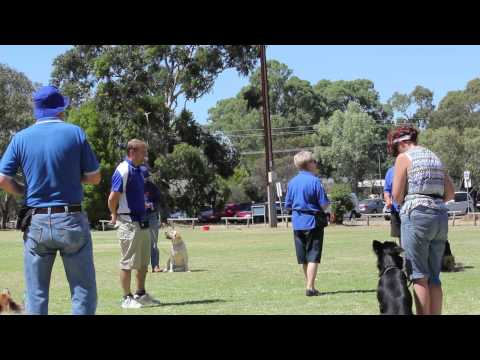 Southern Districts Kennel and Obedience Dog Club