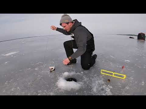 Ice Fishing Walleye On Lake Petenwell (Wisconsin)