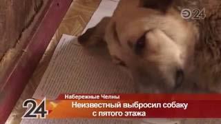 В Набережных Челнах неизвестный сбросил собаку с пятого этажа