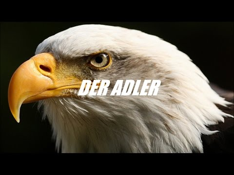Adler ! Motivation(Deutsch/German)