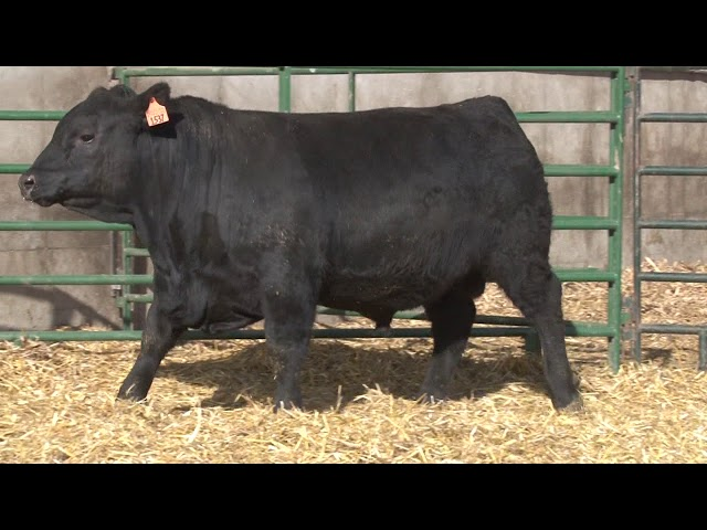 Schiefelbein Angus Farms Lot 28