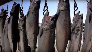 Monster Salmon Fishing on the Open Water of Lake Michigan with Best Bite Guide