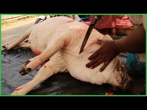 How To Butcher A Pig Processing | Pig Cutting Traditional Way in Hindu Religion Khulna Bangladesh