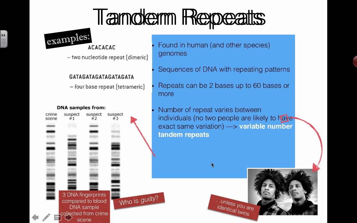 Tandem Repeats (2016) IB Biology - YouTube