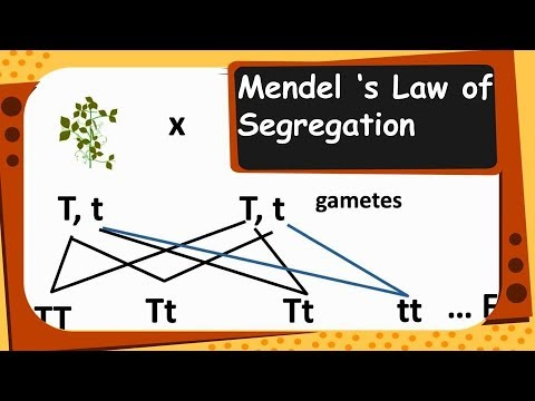 what are the laws of segregation