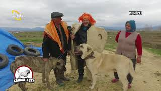 Denizli'de Yörüklerle Birlikteyiz - Kangal Aşkı / Çiftçi TV
