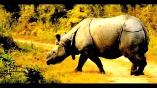 'Moi Ekxingia Gorh' (I am the one-horned Rhino) music video by Aaranyak