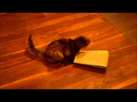 Cat vs. Paper Bag