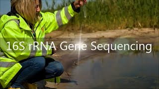 16S rRNA Gene Sequencing Service