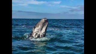 Мексика: как погладить кита (Баха Калифорния)